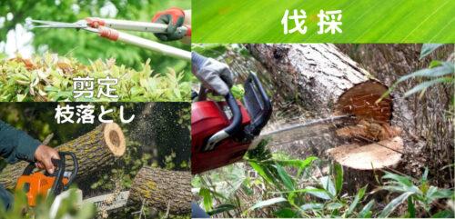 剪定,枝落とし,伐採